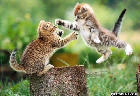 flying-cat-fight.jpg