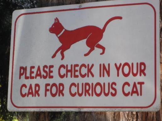curious-cat.jpg